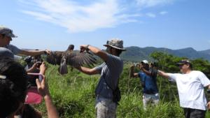 """""""Pío, Pío, dicen las Aves ... en Xalapa y la Región"""""""